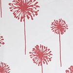 Blushed Dandelion